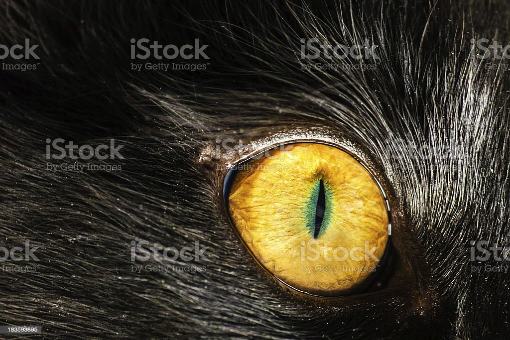 Eye Cat stock photo