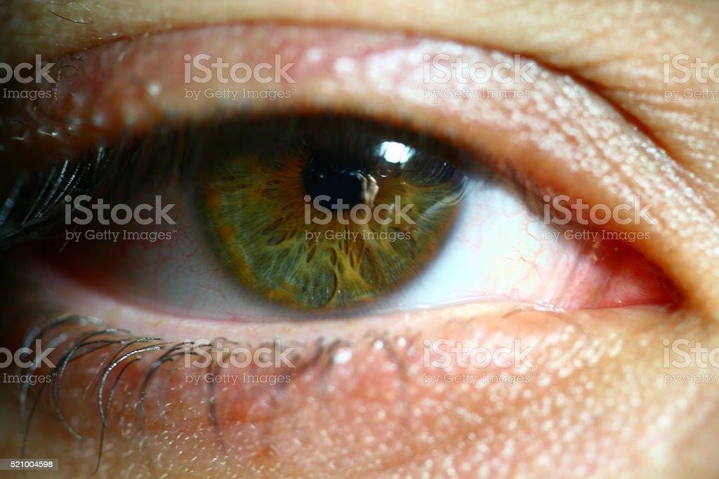 Eye Color Brown stock photo