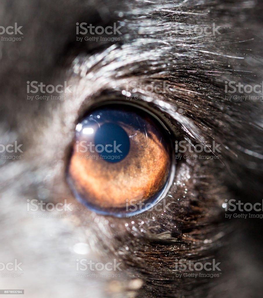 Eye dog. close-up stock photo