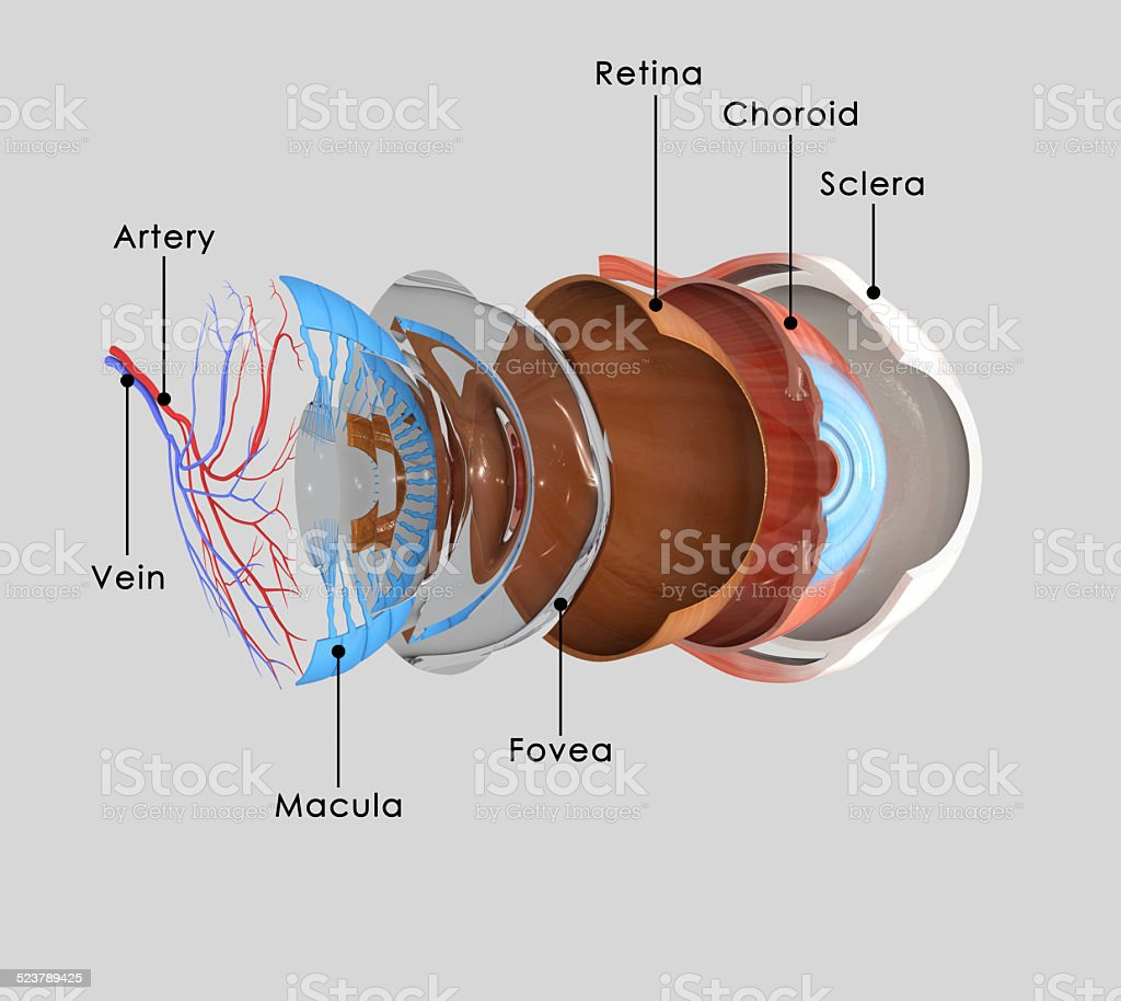 Eye layers stock photo