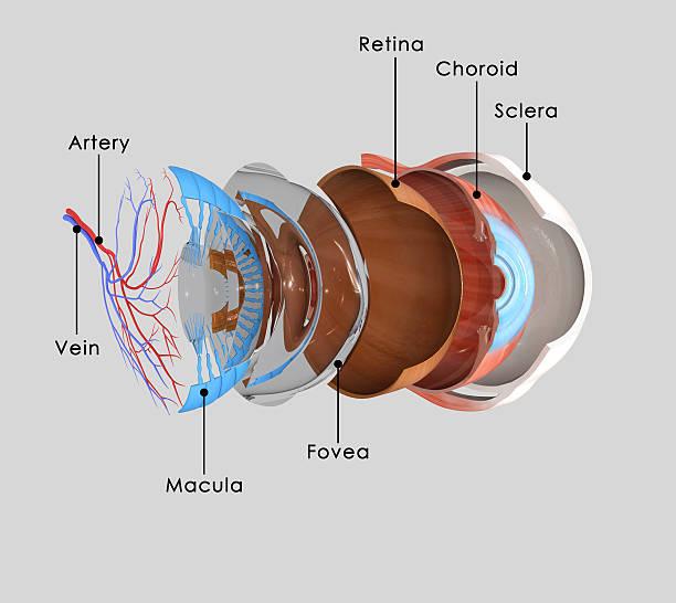 Eye layers stock photo