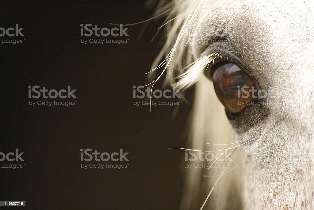 Eye of a Grey Horse stock photo