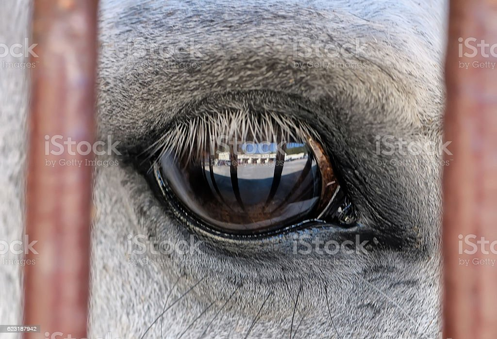 Eye Of A White Horse Close Up Stock Photo Download Image Now Istock