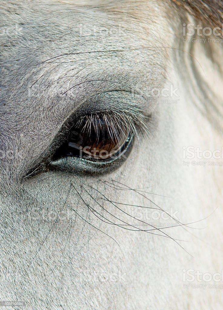 Eye Of A White Horse stock photo