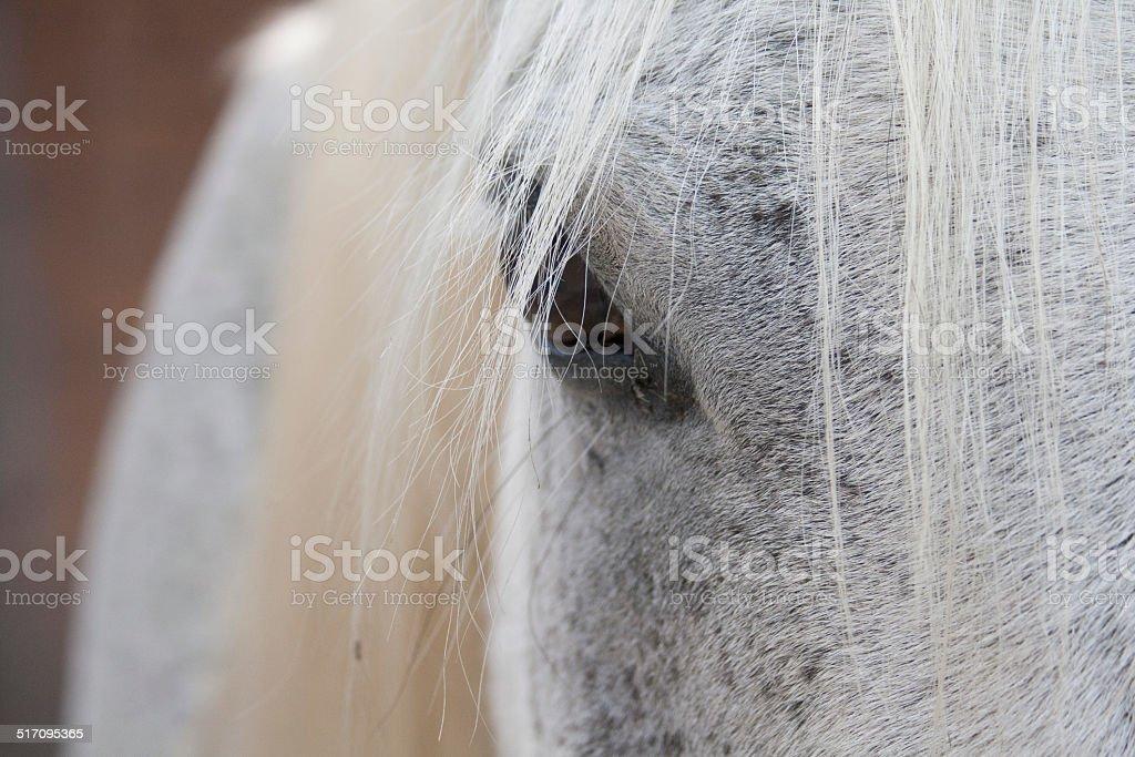 Auge eines weißen Pferdes stock photo