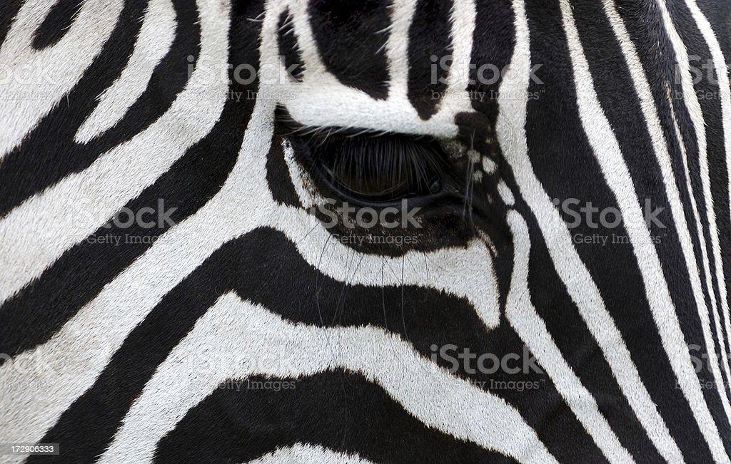 eye of a zebra royalty-free stock photo