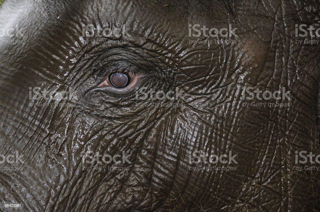 Eye of baby elephant. royalty-free stock photo