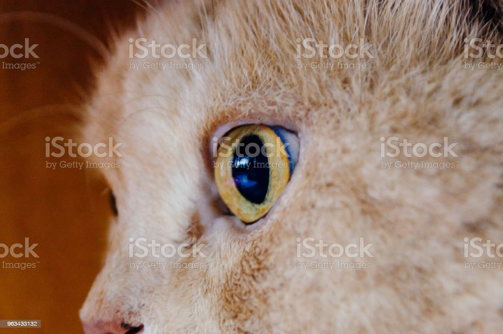 oeil de chat, oeil - Photo de Beauté libre de droits