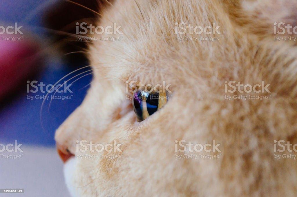 oeil de chat, oeil - Photo de Beauté libre de droits