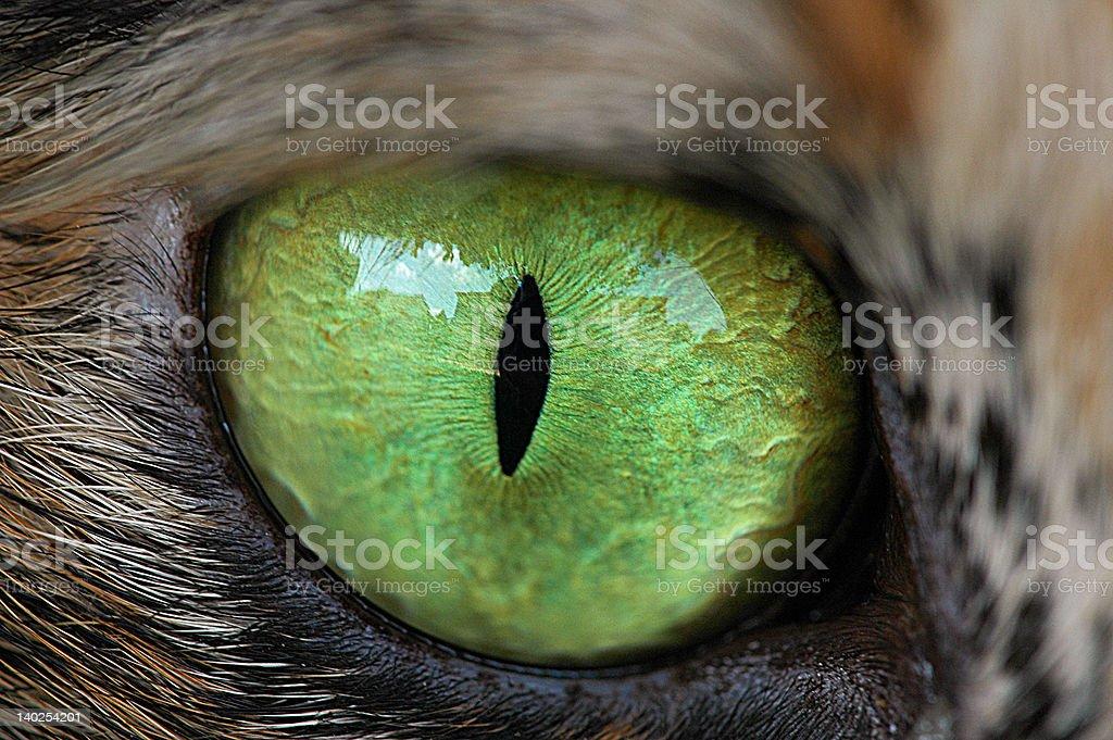 Eye of da tiger stock photo