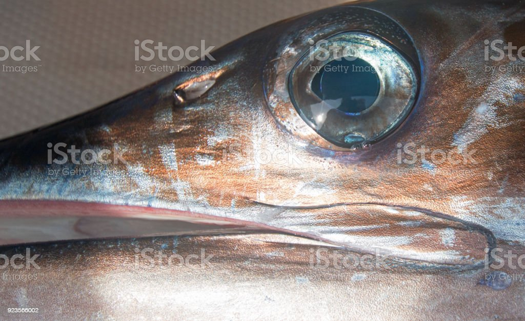 Eye of Striped Marlin stock photo