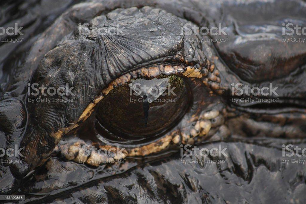 Eye of the Alligator stock photo