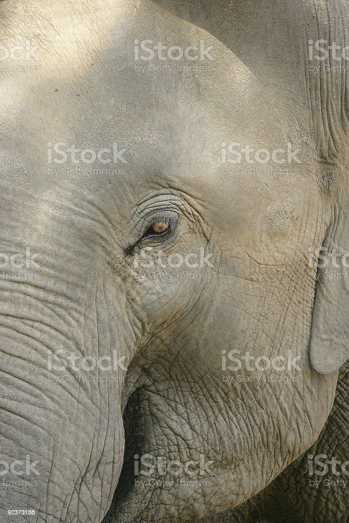 Eye of the elephant royalty-free stock photo