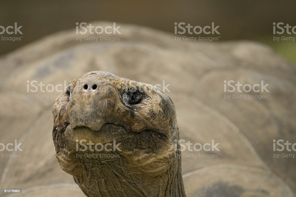 Eye of the Tortoise royalty-free stock photo