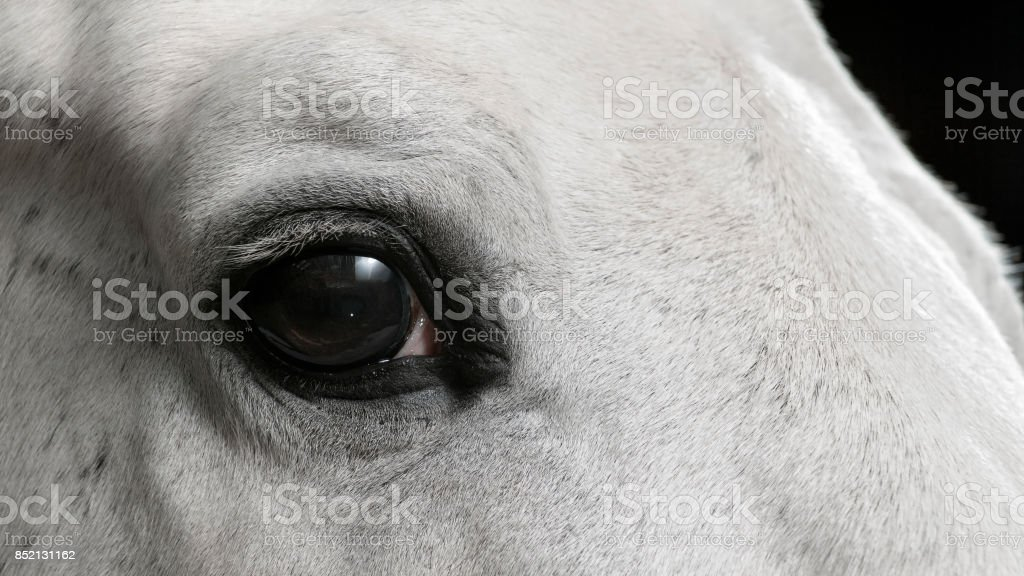 Eye Of White Horse Stock Photo Download Image Now Istock