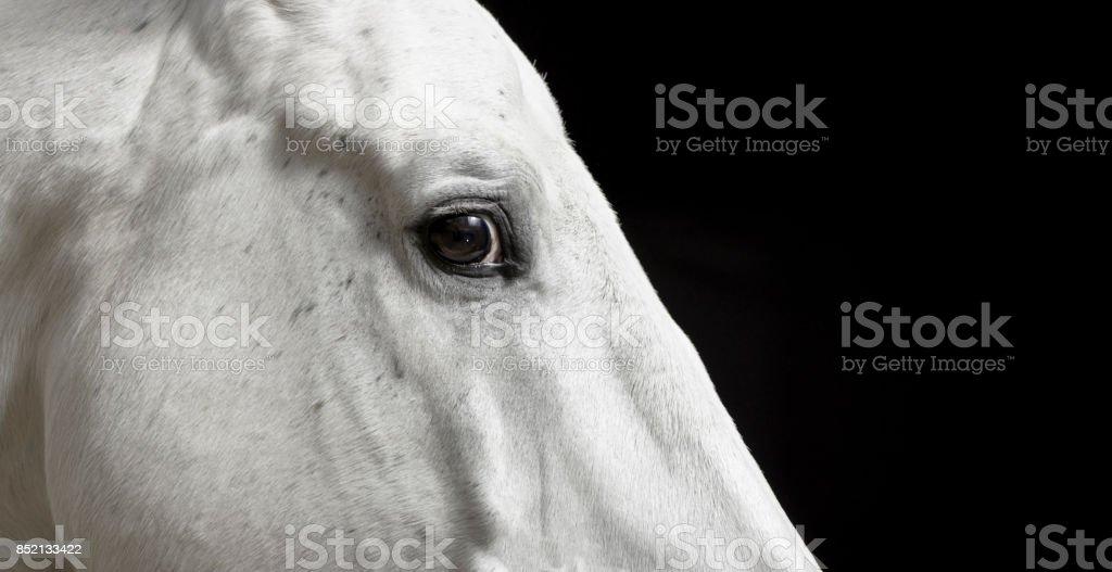 Eye of white horse stock photo