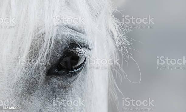 Eye of white mustang picture id518435020?b=1&k=6&m=518435020&s=612x612&h=4srguy8noblrcb3wkhayq5rofogr4qyxv0ej7v6hifa=