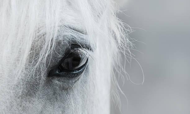 Eye of white mustang picture id518435020?b=1&k=6&m=518435020&s=612x612&w=0&h=q5bioldpwnc5jx1h65wbkfdyjlbtt8x7q4vzdf0qjoi=