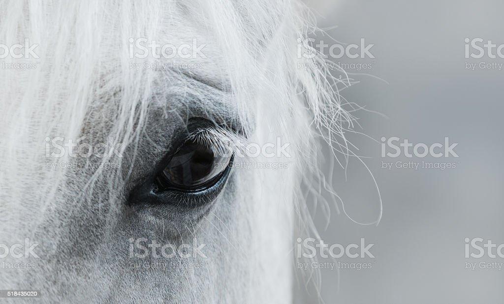 Oko biały Mustang – zdjęcie
