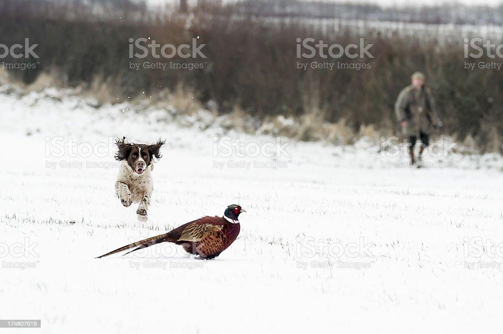 eye on the bird stock photo