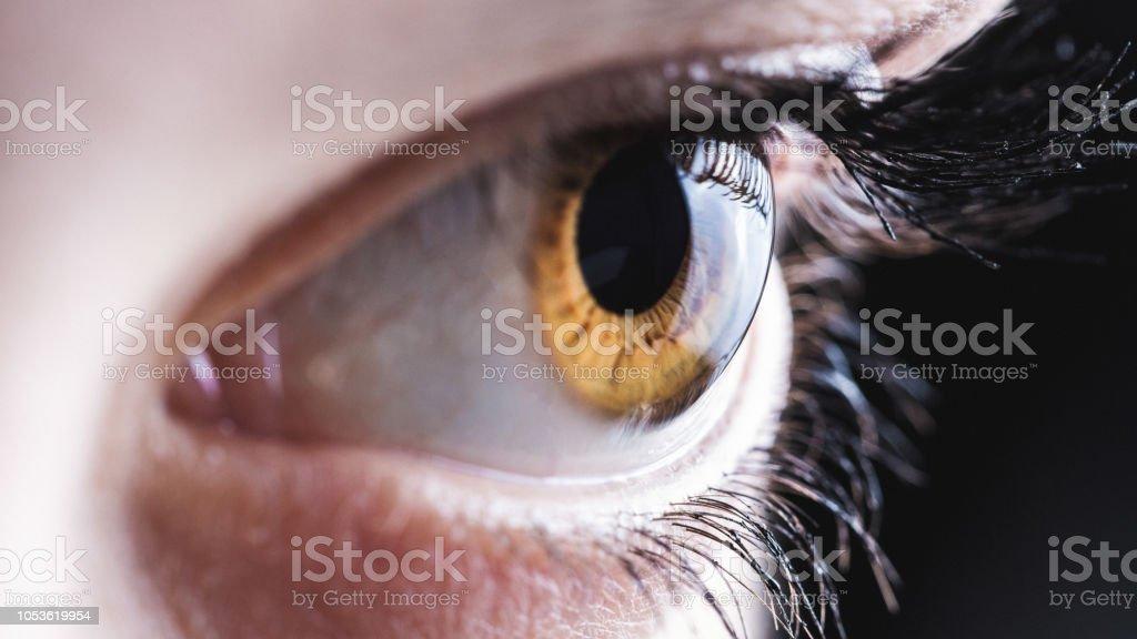 Auge – Foto