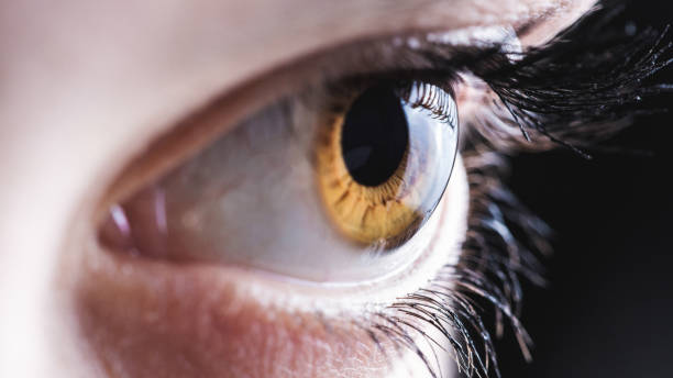 eye - sensory perception stock pictures, royalty-free photos & images