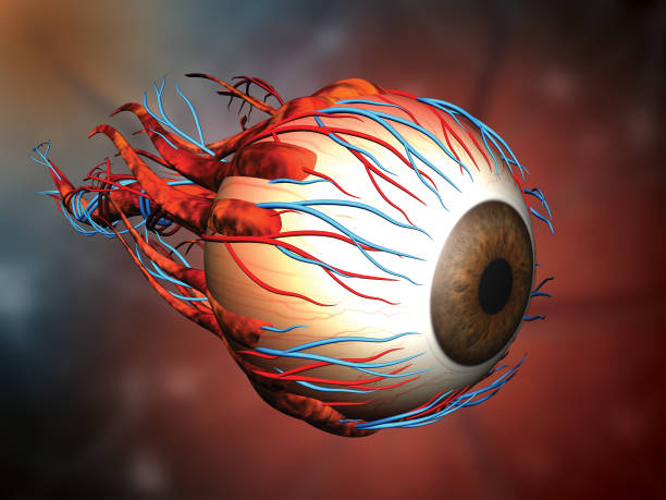auge - illustration optician stock-fotos und bilder