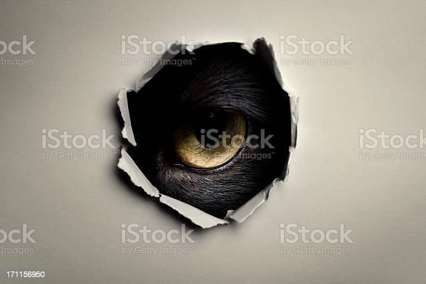 Eye picture id171156950?b=1&k=6&m=171156950&s=612x612&h= dcjljfs8lev7mc3673dot1eesj62zs ox0qb27bgg4=