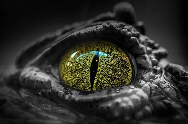 Eye Eye af a crocodile animal eye stock pictures, royalty-free photos & images
