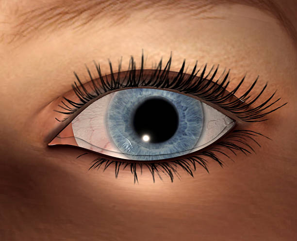 eye  - 3d wimpern stock-fotos und bilder