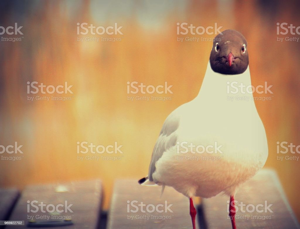 Oog in oog - Royalty-free Autoreis Stockfoto