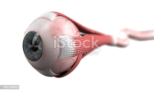 Eyeball with muscles and optic nerve [url=file_closeup.php?id=14502283][img]file_thumbview_approve.php?size=1&id=14502283[/img][/url] [url=file_closeup.php?id=12209969][img]file_thumbview_approve.php?size=1&id=12209969[/img][/url] [url=file_closeup.php?id=12209960][img]file_thumbview_approve.php?size=1&id=12209960[/img][/url] [url=file_closeup.php?id=12079990][img]file_thumbview_approve.php?size=1&id=12079990[/img][/url] [url=file_closeup.php?id=10956063][img]file_thumbview_approve.php?size=1&id=10956063[/img][/url] [url=file_closeup.php?id=10769834][img]file_thumbview_approve.php?size=1&id=10769834[/img][/url] [url=file_closeup.php?id=17896753][img]file_thumbview_approve.php?size=1&id=17896753[/img][/url] [url=file_closeup.php?id=17895996][img]file_thumbview_approve.php?size=1&id=17895996[/img][/url] [url=file_closeup.php?id=17636443][img]file_thumbview_approve.php?size=1&id=17636443[/img][/url]