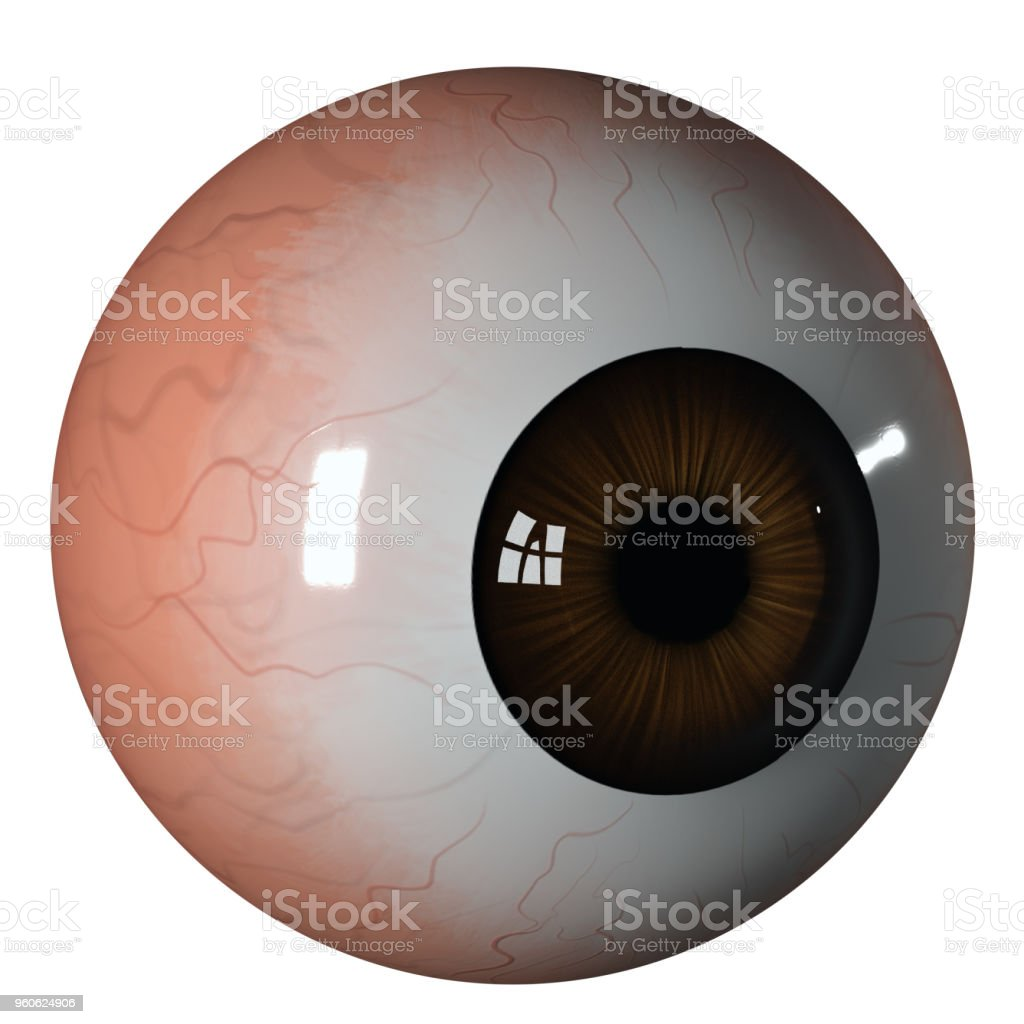 Eyeball Brown Iris Side View Stock Photo & More Pictures of Anatomy ...