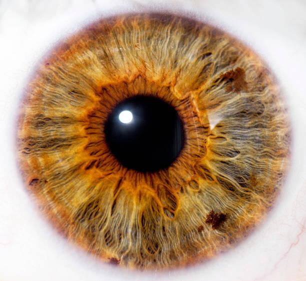 Eyeball - close up stock photo