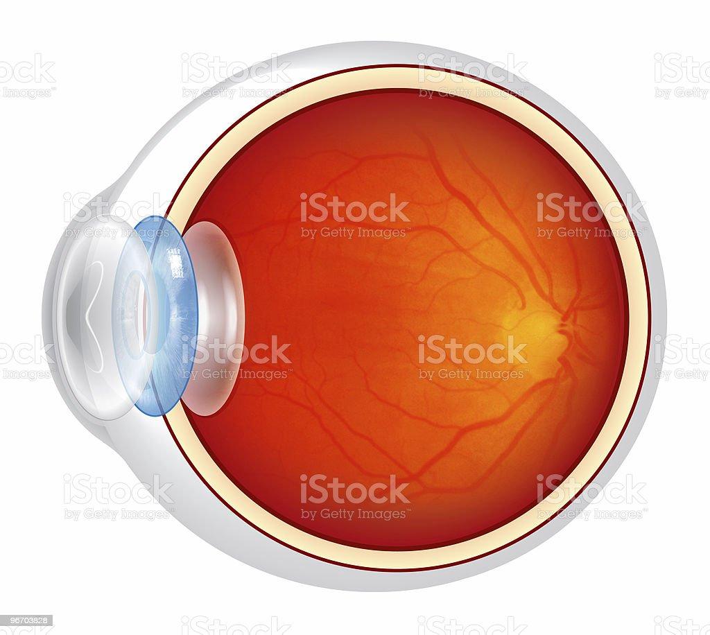 Eyeball royalty-free stock photo