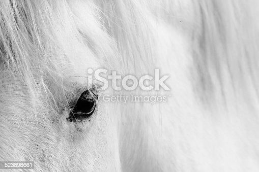 istock Eyelash of a white horse. 523898661