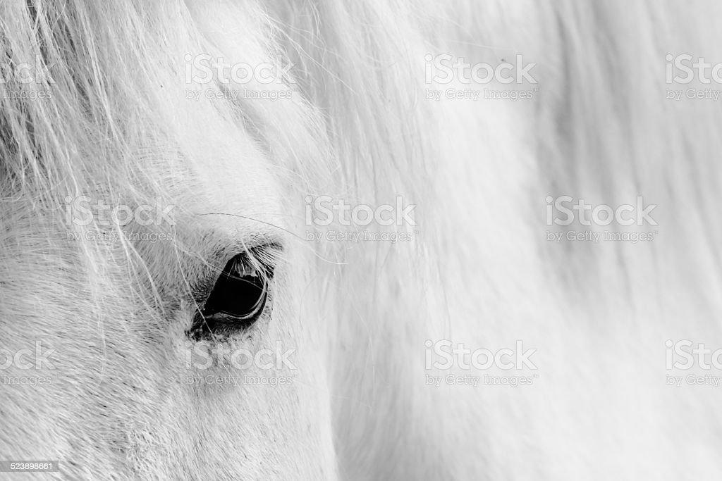 Eyelash of a white horse. stock photo