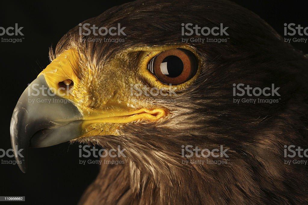 Eyes Eagle Stock Photo