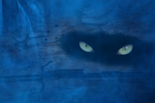 古い松の木の幹に隠れている野生の獣の目は青い夜霧で覆われている - かすみのストックフォトや画像を多数ご用意