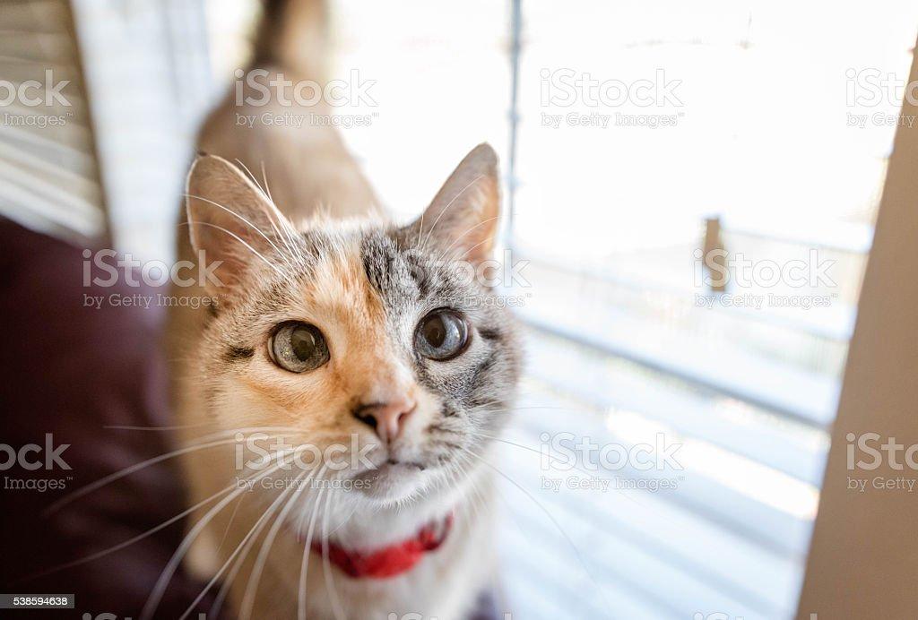 Eyes of Mamma Cat stock photo