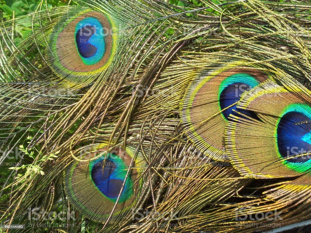 eyes foto de stock libre de derechos