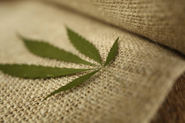 Fabric made from hemp . Cannabis fiber and leaf stock photo
