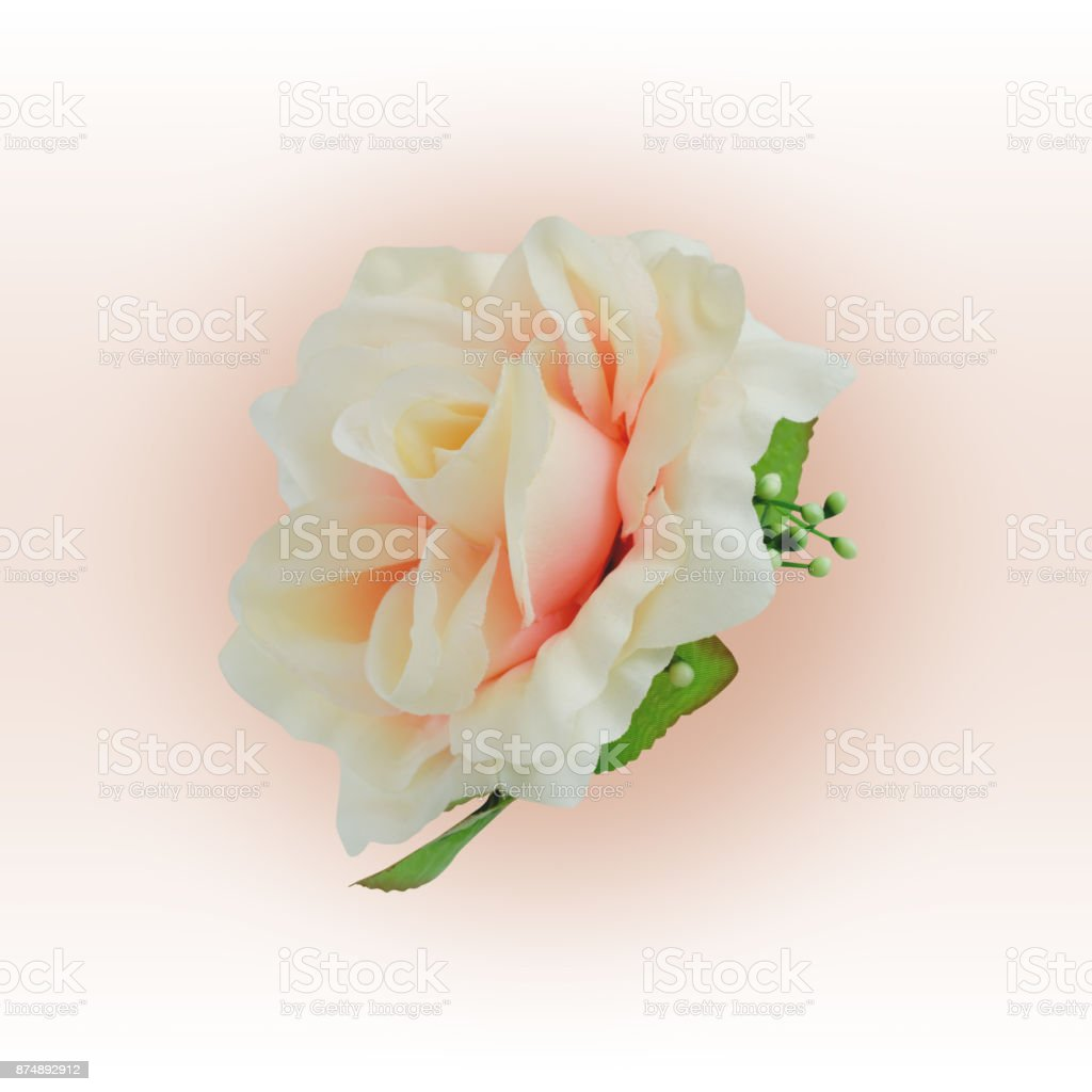 Fabric orange rose isolated on radial background with working path stock photo