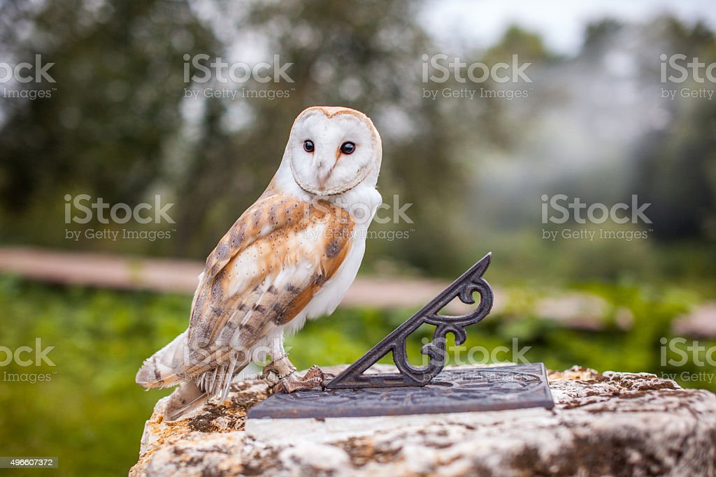 Fabulous owl sitting on the sundial stock photo
