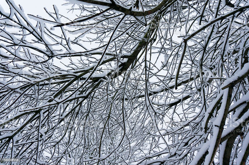 Fabulous winter sky background with tree branches stock photo