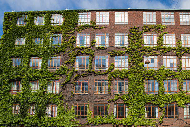 facade of red brick building with multiple windows, copenhagen - ivy building imagens e fotografias de stock
