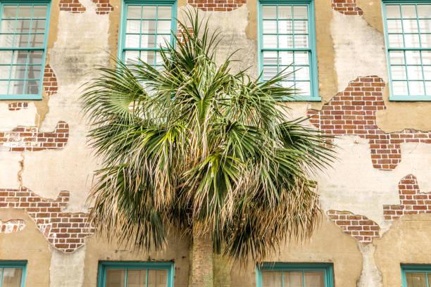 Facade with a palm tree in Charleston, South Carolina stock photo