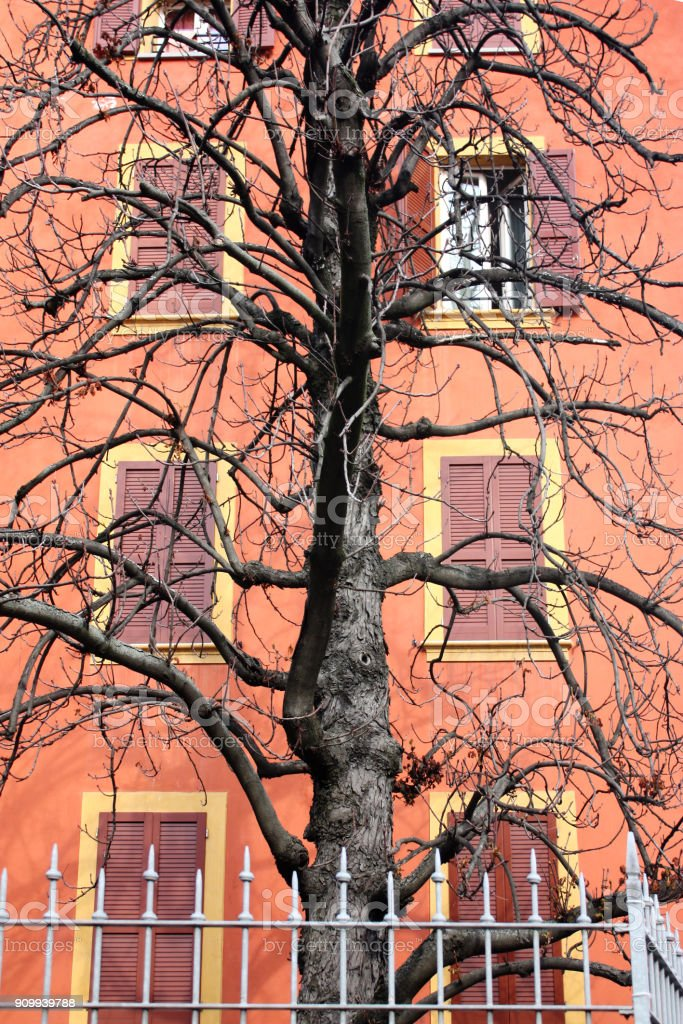 facade with windows and tree stock photo