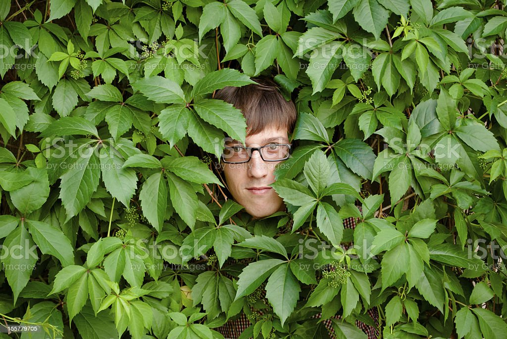 Face among ivy. stock photo