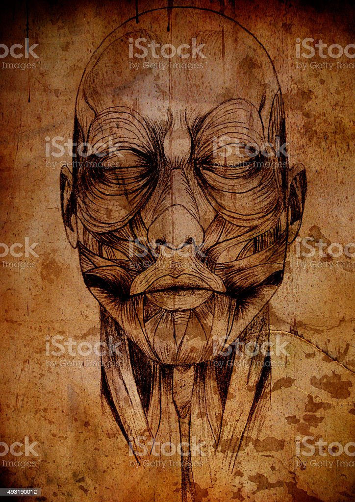 Face and muscles portrait stock photo